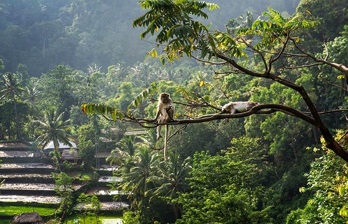 7-Ubud-Bali-giardino-pensile-migliori-vacanze-per-famiglie-migliori-destinazioni-per-vacanze-in-famiglia