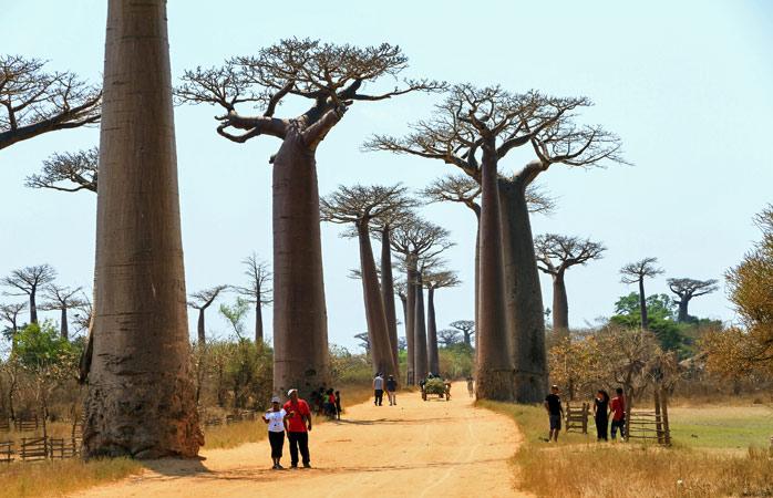 Abbracciate un baobab sulla Via dei Baobab a Morondava