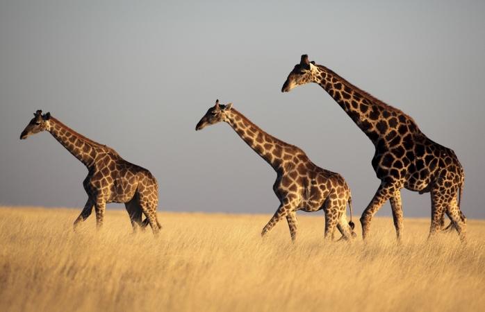 ou partir en septembre - Namibie