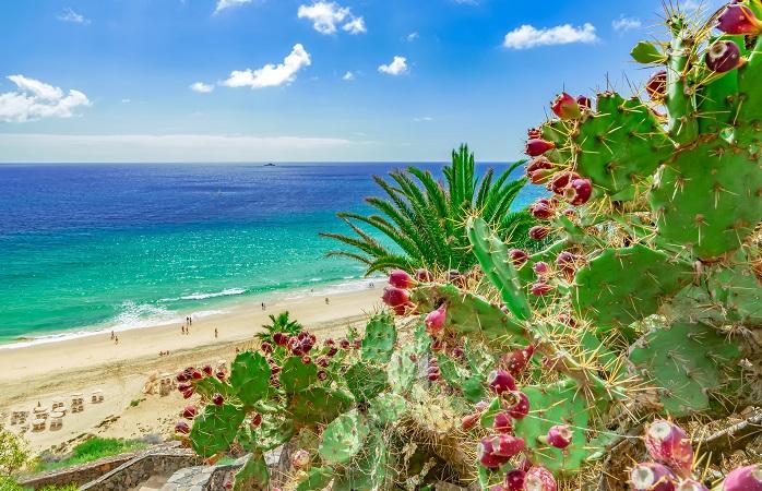 Mare, magnifiche spiagge e temperature sempre miti a Fuerteventura