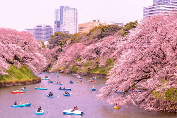 Aprile è il mese perfetto per ammirare la fioritura dei ciliegi a Tokyo, non vorreste già essere lì? ©Yoshikazu Takada